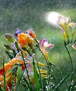 געגועים לגשם
