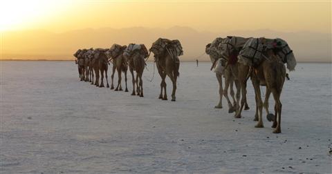 מסע אל מדבר דנקיל המדבר החם בעולם בעקבות שיירות המלח ההיסטוריות של בני שבט האפר ותופעות גיאולוגיות ייחודיות